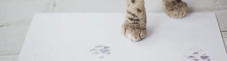 Paw Print Kits | Little Finger Prints